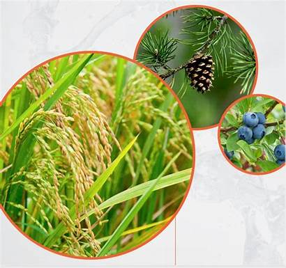 Crop Improvement Benson Genomics Hill Collaborate Rapid