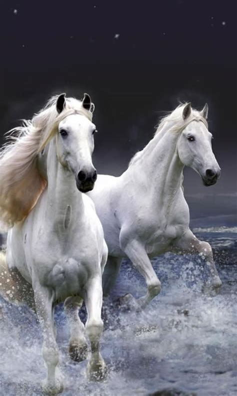 horse wallpaper gallery