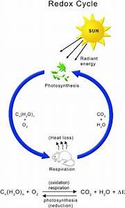 Global Energy Flux Underlying Redox Cycle Between