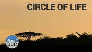Circle Of Life  Shaba