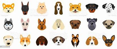 Different Breeds Dogs Heads Canines Isolated Dog