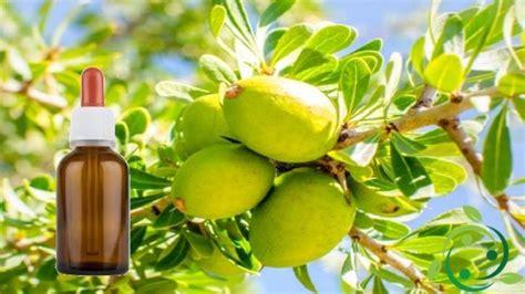 olio di argan uso alimentare olio di argan caratteristiche propriet 224 uso alimentare