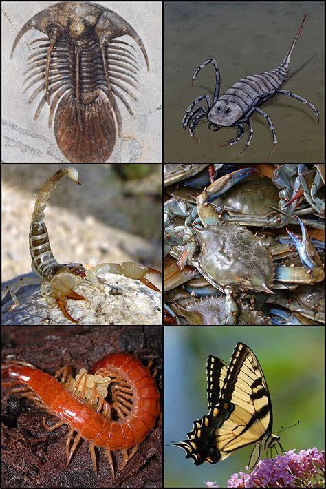 Info Hewan Tumbuhan Prasejarah: Invertebrata Mungil yang ...