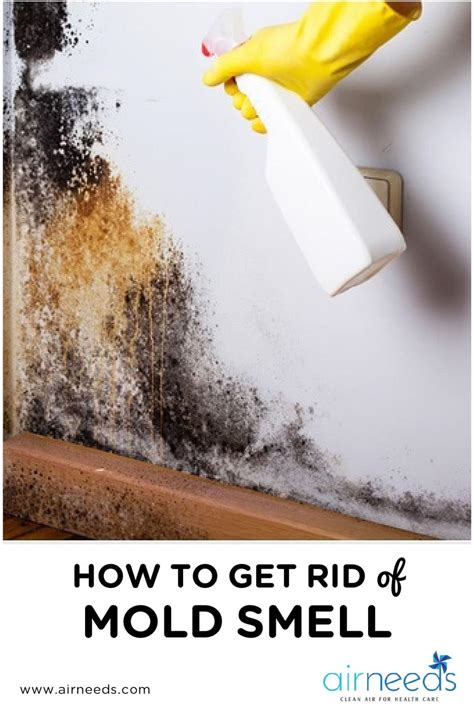 4 Tips On How To Get Rid Of Mold Smell In The House Airneeds