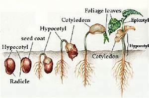 Amy B U0026 39 S Bio 20 Blog  Agriculture