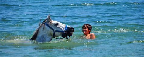 sea trail mountain swimming horses saltwater riding fresh horse horseback trails panorama catalonia pyrenees