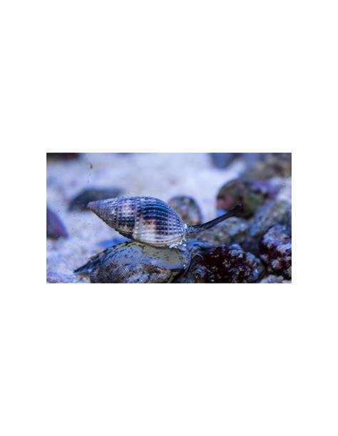 Jūras gliemeži