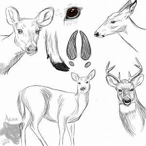 Deer by Furmiliar-Faces on DeviantArt