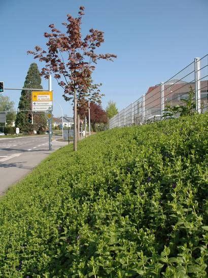 bodendecker auf laufenden meter sicherer gruener