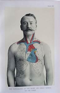 Antique 1900s Medical Diagram Scientific Print Human