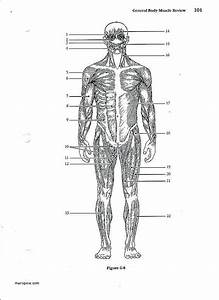 Printable Anatomy Labeling Worksheets Ny 6586  Blank