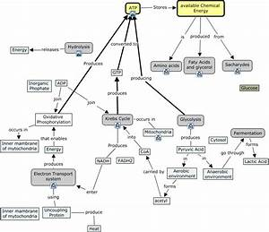Oxidative Phosphorylation Concept Map | My blog