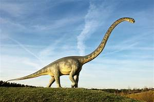 Why Diplodocus Did Not Put All Her Eggs In One Basket