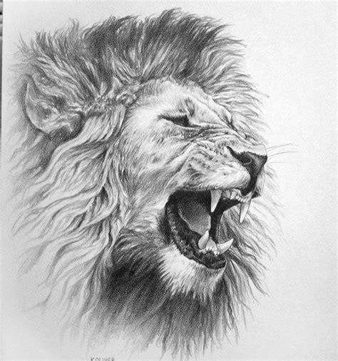 lion pencil drawing google search captain donnas