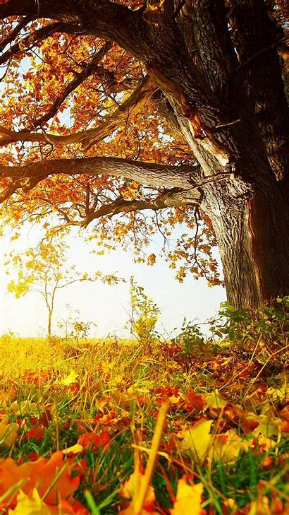 Fall Phone Wallpapers Iphone Autumn Background Leaves