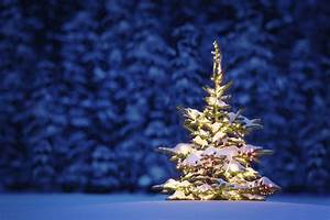 2016 Christmas Tree Hd Wallpaper | Merry Christmas Tree ...