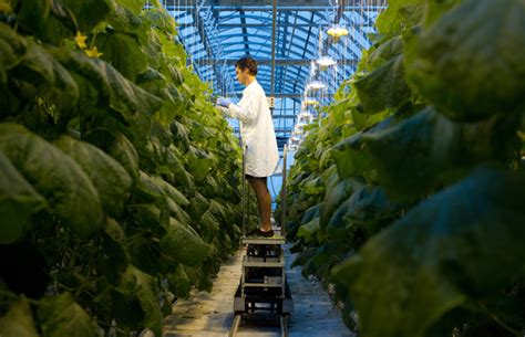 green lava l sky s the limit for rooftop farm project