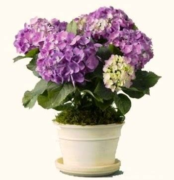 pictures of potted flowers diy potted plant centerpiece stylish spoon
