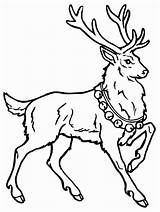 Deer Coloring Pages Coloringpages1001 Drawing Colored Reindeer Christmas Colorier Animals Rudolph sketch template