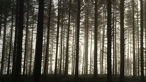 Free Images : landscape, tree, nature, branch, wood, mist ...