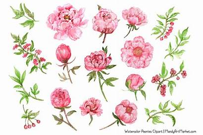 Peony Peonies Watercolor Pink Clipart Watercolour Japanese