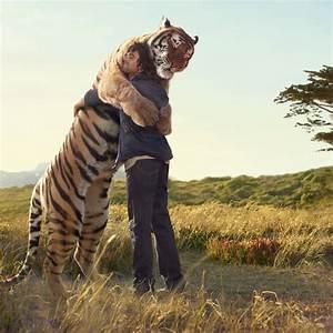 The Wild Hug : tiger hugging man desktop wallpapers 1024x1024 ~ Eleganceandgraceweddings.com Haus und Dekorationen