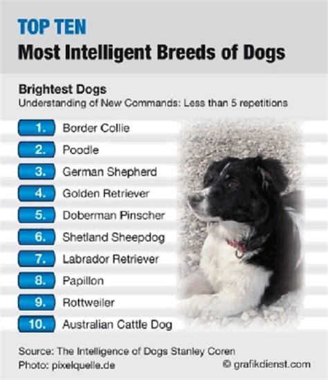 smartest breeds 15 golden retriever facts lifespan types temperament