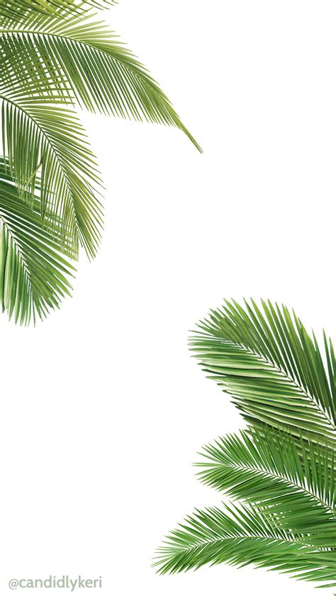 Palm Background Palm Tree And White Wallpaper Free For Iphone