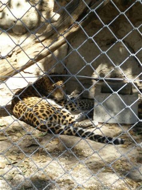 zoo fauverie du faron picture of zoo fauverie du faron toulon tripadvisor