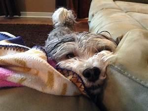 Laisser Un Chien Seul Quand On Travaille : mon chien ne mange plus vomit et est faible forum soigner son chien page 22 wamiz ~ Medecine-chirurgie-esthetiques.com Avis de Voitures