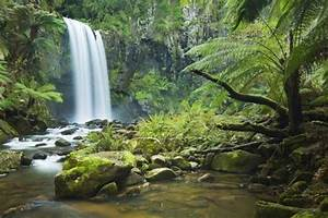 Image Gallery rainforest ecosystems