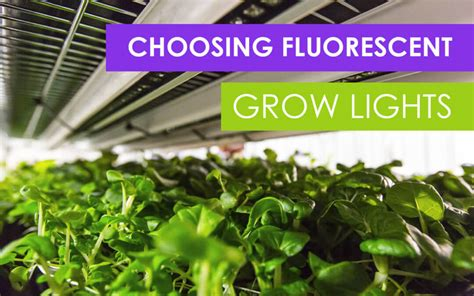 what of fluorescent lights to grow plants how to choose fluorescent grow lights for your farm upstart university