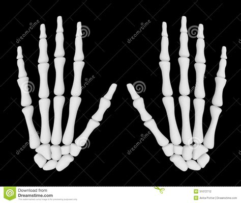 render   pair  skeleton hands stock photography