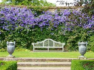 Plantes Grimpantes Mur : les plantes grimpantes les plus belles pour jardin et balcon ~ Melissatoandfro.com Idées de Décoration
