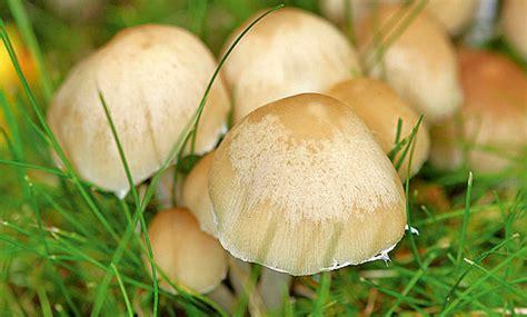 Gegen Pilze Im Garten by Pilze Im Garten Pilze Im Garten Wie Wegbekommen