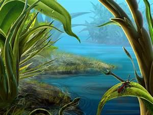 Exotic Beetle Desktop Wallpaper