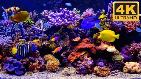 Wallpaper For Dual Monitors Aquarium Live Wallpaper For Pc 55 Images