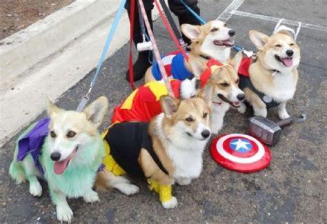 avengers   replaced  corgis