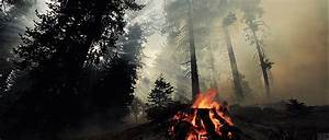Forest Fire GIF - Find & Share on GIPHY