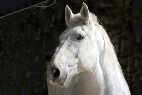 horse wallpapers background face head hd mane wall animal 2400 1607 1080p hdwallpaper nu
