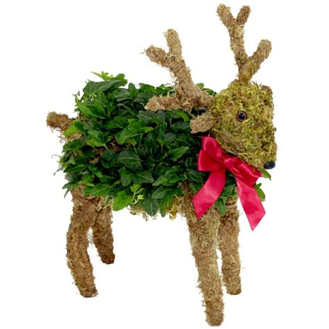 ivy reindeer topiary christmas pinterest