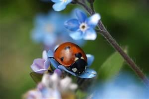 Fliegen Im Fensterrahmen : wespen im fensterrahmen bienen und wespen im fensterrahmen ursachen abhilfe irgendwelche ~ Buech-reservation.com Haus und Dekorationen