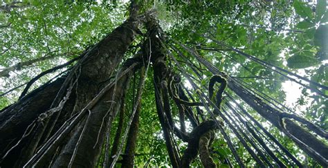 Atmosphere D'amazonie » Guyane Sauvage