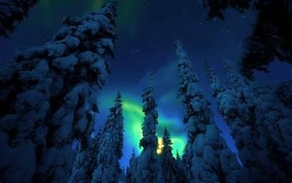 Forest Night Snow Trees Desktop Polar Star