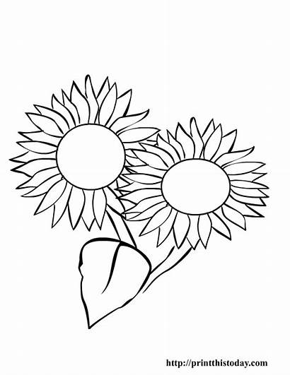 Summer Coloring Pages Printable Flowers Sun Painting