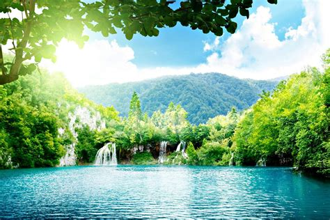 Beautiful Greenery Of Real Nature Scene Wallpaper Free