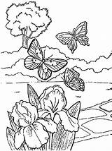 Coloring Flower Butterfly Pages Springtime Butterflies Spring Play Printable Colouring Near Flowers Adult Drawings Looking Bouquet Kleurplaat Stress sketch template
