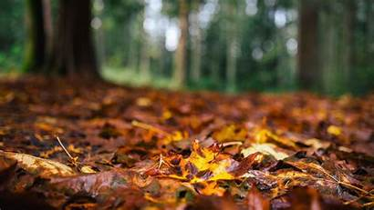 Laptop Wallpapers Autumn Aesthetic Fall Nature Woods