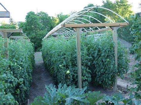 building  tomato trellis youtube