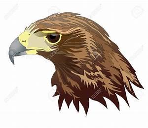 Beak hawk clipart, explore pictures